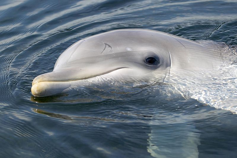 dolfijn Spetter, tuimelaar